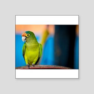 Green Parakeet on Nicaraguan Island Sticker