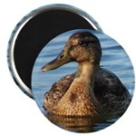 "Ducky 2.25"" Magnet (100 pack)"