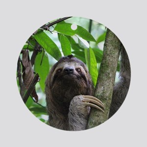 Sloth_20171101_by_JAMFoto Round Ornament
