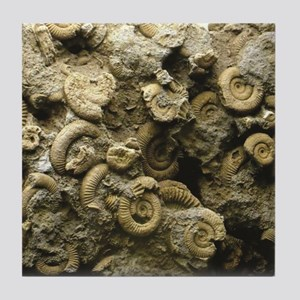 cluster of fossil shells Tile Coaster