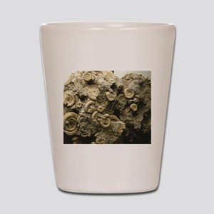cluster of fossil shells Shot Glass