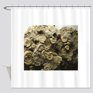 cluster of fossil shells Shower Curtain