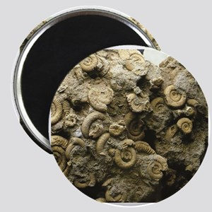 cluster of fossil shells Magnets