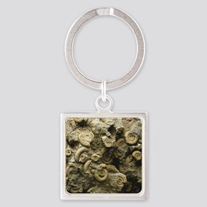 cluster of fossil shells Keychains