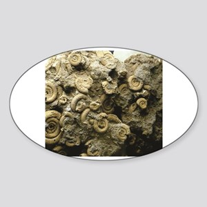 cluster of fossil shells Sticker