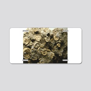 cluster of fossil shells Aluminum License Plate