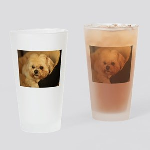 Koko blond Lhasa apso relaxing in s Drinking Glass