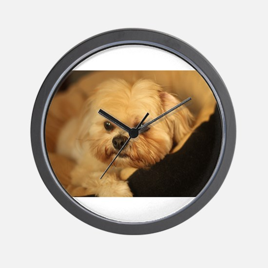 Koko blond Lhasa apso relaxing in soft Wall Clock