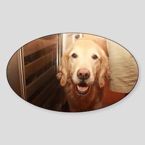 candid Nala golden retriever dog peeking i Sticker