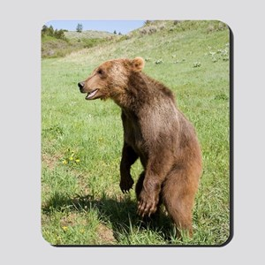 Grizzly Bear Mousepad