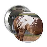 "White Bird Appaloosa Horse Re 2.25"" Button (100 pa"