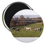 "White Bird Appaloosa Horse Re 2.25"" Magnet (10 pac"