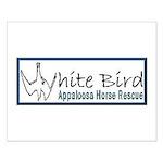 White Bird Appaloosa Horse Re Small Poster