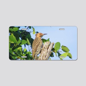 Northern Flicker Aluminum License Plate