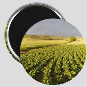 Camino Green Field Round Magnets