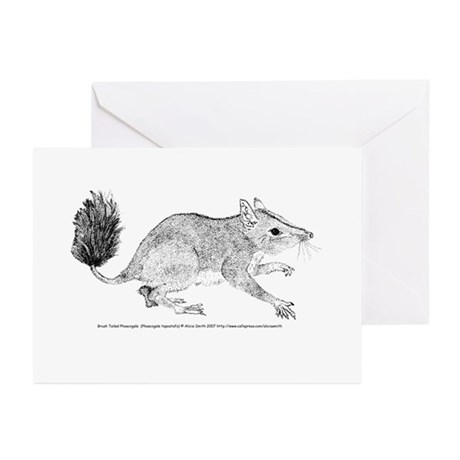 Brush Tailed Phascogale Greeting Cards (Pk of 10)