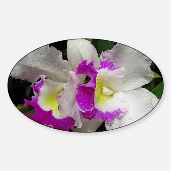 Cute Floral cattleya orchids Sticker (Oval)