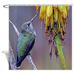 Perched Female Anna's Hummingbird Shower Curta