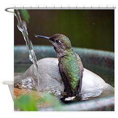Anna's Hummingbird In The Fountain Shower Curt