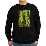 Blackberry Kush Sweatshirt (dark)