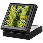 Blackberry Kush Keepsake Box