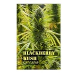 Blackberry Kush (with nam Postcards (Package of 8)