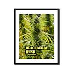 Blackberry Kush (with name) Framed Panel Print