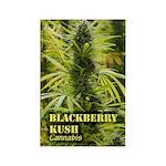 Blackberry Kush (with name) Rectangle Magnet