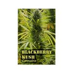 Blackberry Kush (with Rectangle Magnet (100 pack)