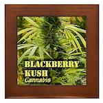 Blackberry Kush (with name) Framed Tile