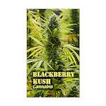 Blackberry Kush (with name) Rectangle Car Magnet