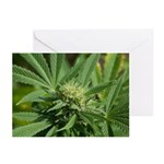 Larry OG Greeting Cards (Pk of 20)