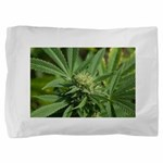 Larry OG Pillow Sham