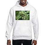 Pineapple Hooded Sweatshirt