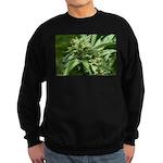 Pineapple Sweatshirt (dark)