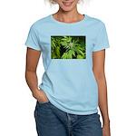 Grapefruit Kush Women's Light T-Shirt