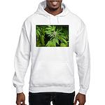Grapefruit Kush Hooded Sweatshirt