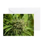 Critical Jack Greeting Cards (Pk of 20)