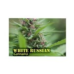 White Russian (with nam Rectangle Magnet (10 pack)