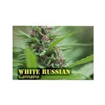 White Russian (with na Rectangle Magnet (100 pack)