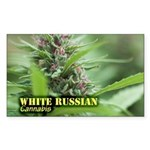 White Russian (with name Sticker (Rectangle 50 pk)