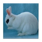 Grooming Hotot Bunny Rabbit Tile Coaster