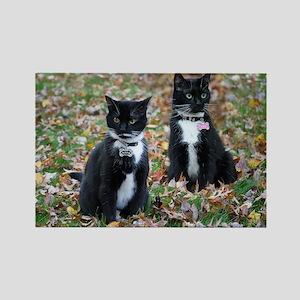 Kitties-sisters calendar 5 Magnets