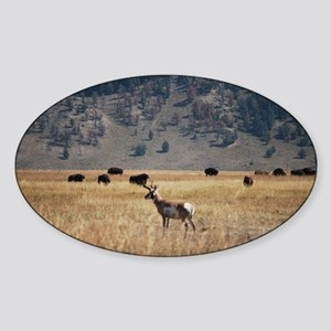 Yellowstone Bison and Antelope Sticker