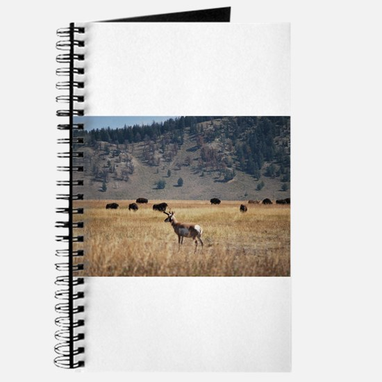Yellowstone Bison and Antelope Journal