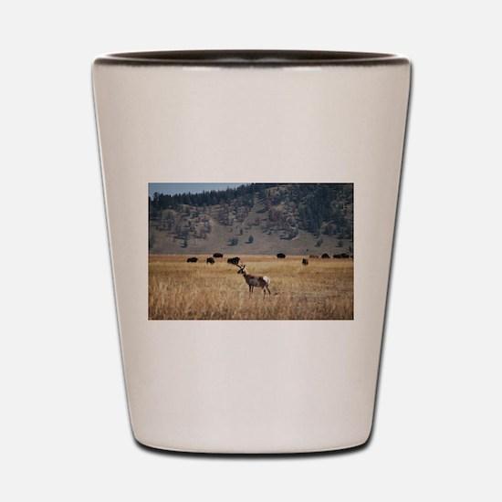Yellowstone Bison and Antelope Shot Glass