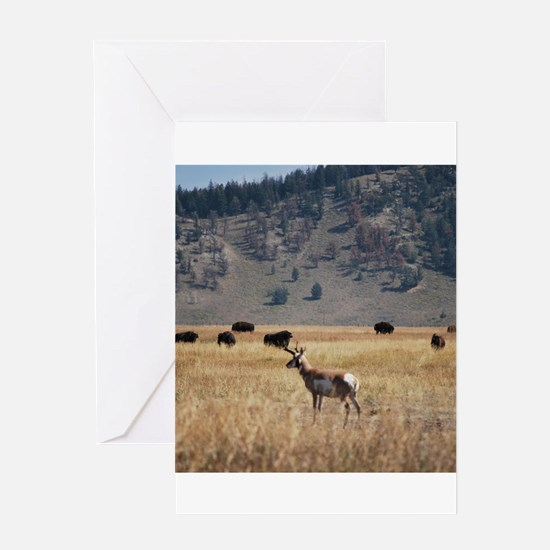 Yellowstone Bison and Antelope Greeting Cards