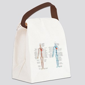 Blood circulatory chart Canvas Lunch Bag