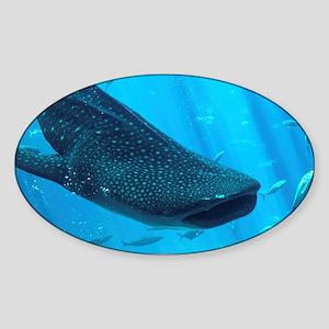 WHALE SHARK 2 Sticker (Oval)