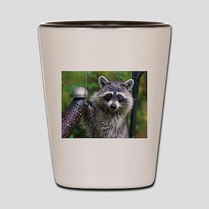 Bandit Shot Glass